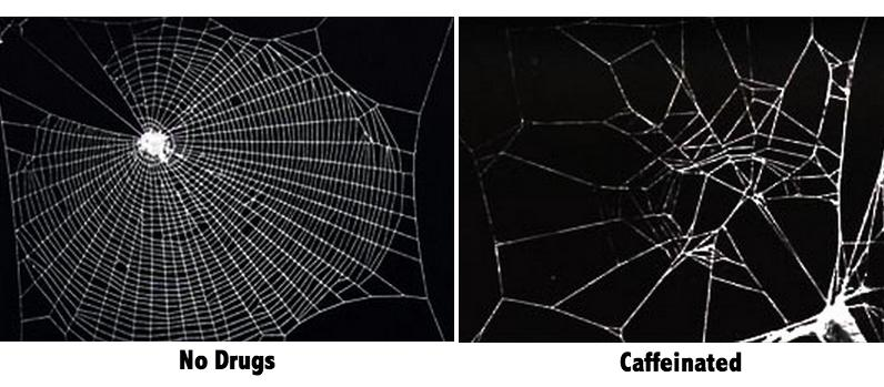 spiders and caffeine